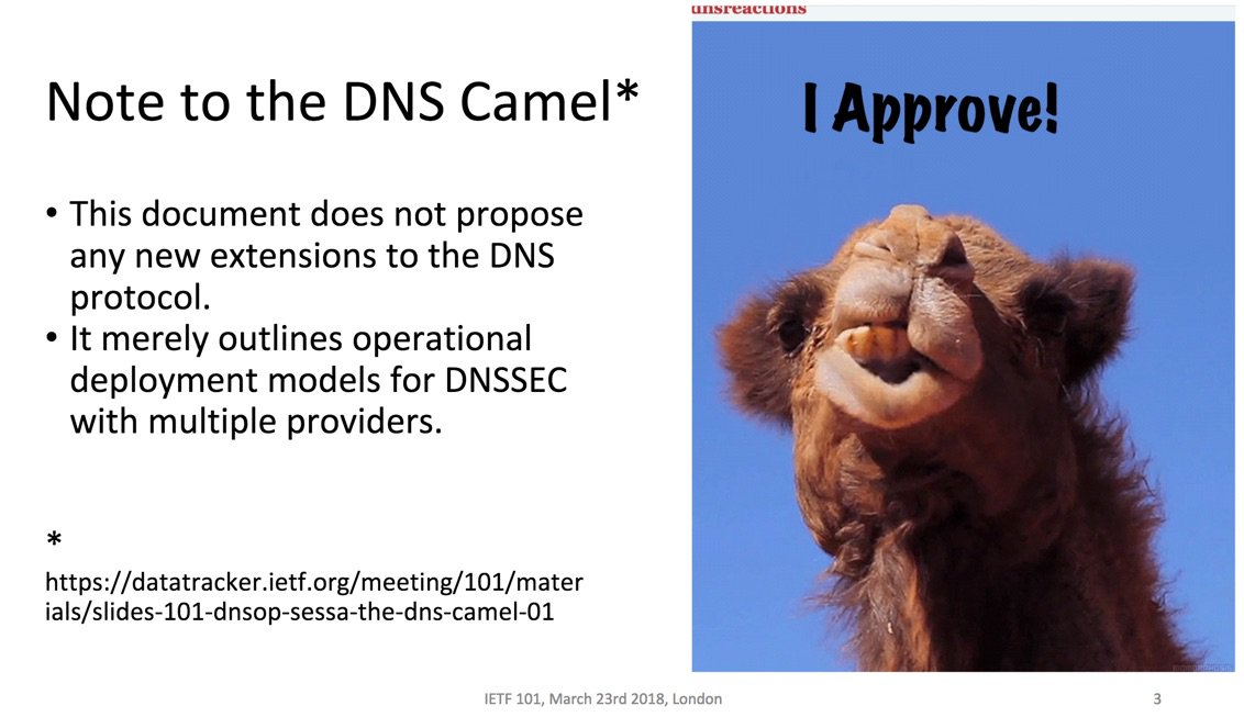 """The DNS Camel"""", or, the rise in DNS complexity 